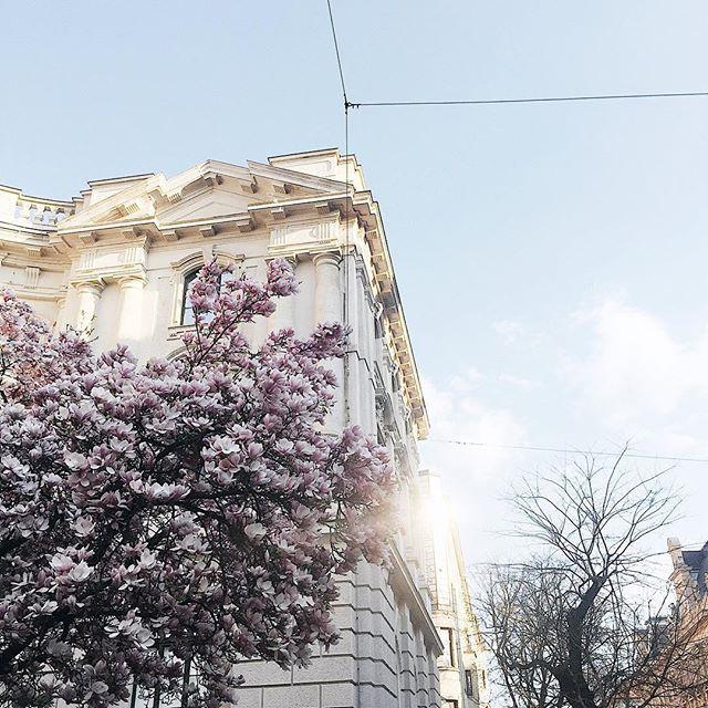 OH SPRING. ⠀ Der Frühling ist in Graz angekommen.