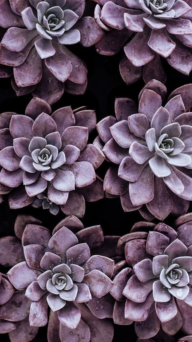 Pin by Claudiaez on Cactaceas in 2020 Succulents