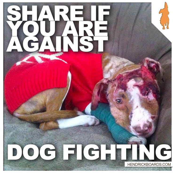 """how to help stop dog fighting 6 ways to prevent feeding time from turning into a food fight  to keep the peace and break up a fight,"""" dr horwitz says """"for the dog who eats fast, consider ."""
