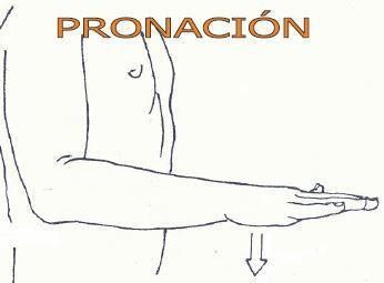 Movimiento del antebrazo y de la mano. Por el que radió rota mesualmente sobre su eje Longitudinal, de forma que que la palma de la mano mira hacia dirección posterior, y el dorso, en dirección anterior.