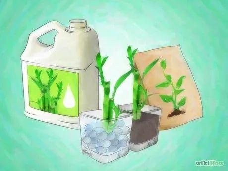 Imagem intitulada Grow Lucky Bamboo Step 8