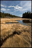 Grasses and pond, Schoodic Peninsula. Acadia National Park, Maine