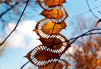 Reminds me of Andy Goldsworthy