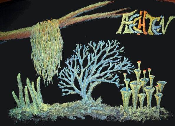 Waldorf ~ 5th grade ~ Botany ~ Lichens ~ chalkboard drawing