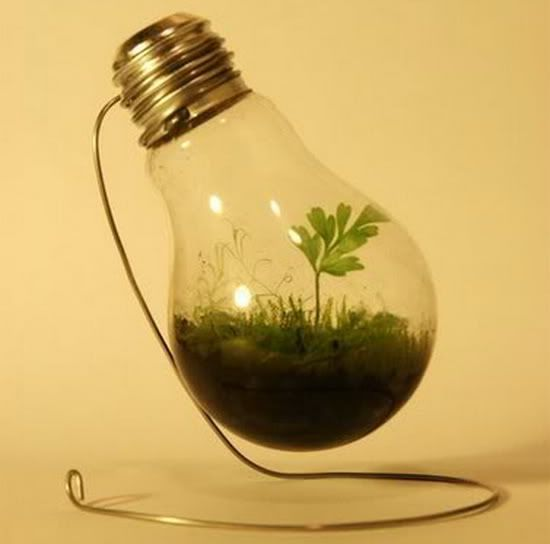 Use a light bulb to start a mini green house for a friend who's been meaning to start an indoor garden.