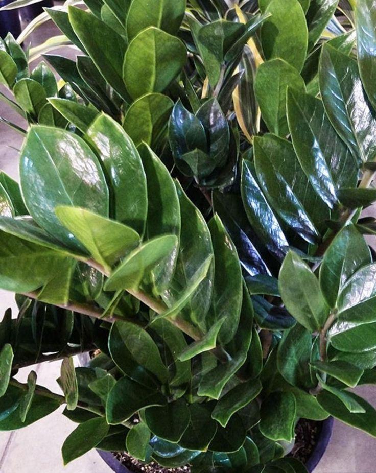 10 plantes pour pièces très peu éclairées
