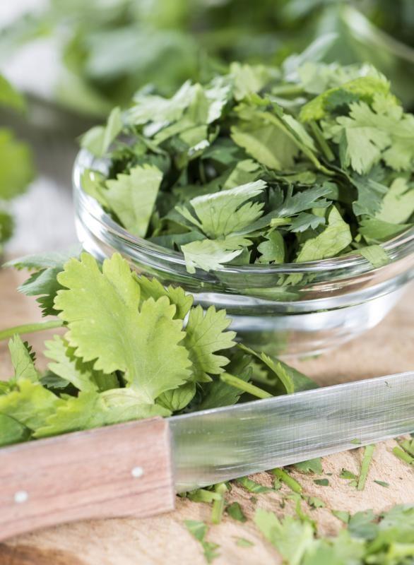 Cilantro Tea Health Benefits