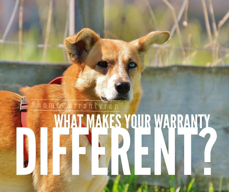 """Choice Home Warranty The #1 question I've been asked over the past 2 weeks - """" what makes you different!""""    I could talk for hours about makes us """"different"""" because it also makes us better.    I will do a FB live highlighting some details  (go follow Julie Stokes Home Warranty Rep) but here are 7 points to review now."""