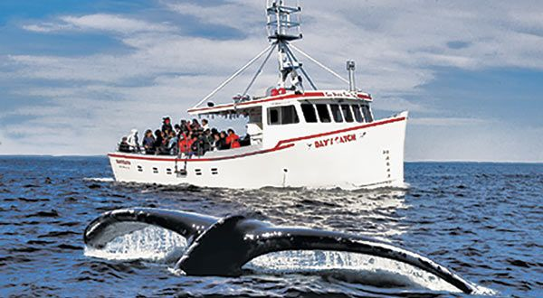 """Climb aboard the """"Day's Catch"""" for an unforgettable encounter with the whales and birds of the bay. 