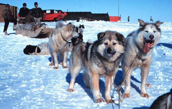 Auf Hundeschlitten Touren das Yukon erkunden