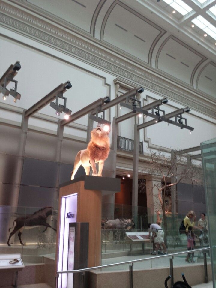 National Museum Mammals in Washington DC DC