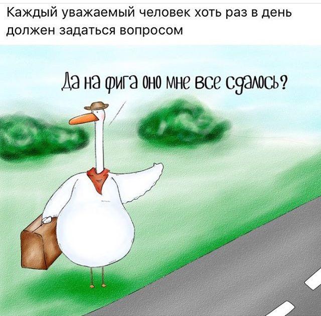 Картинки приколы про гусей
