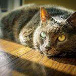 La vitamina del gato, de la A a la K