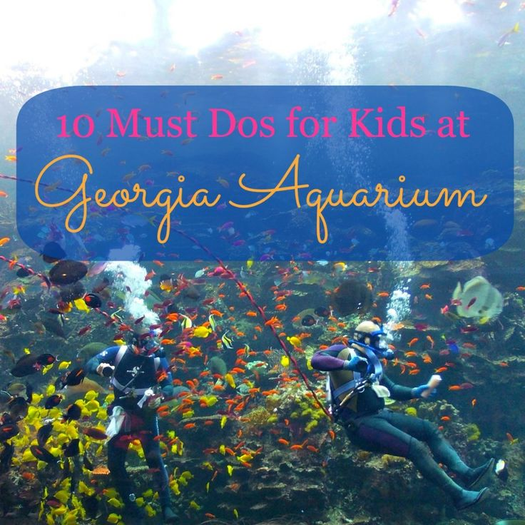 Georgia Aquarium - 10 Must Dos for Kids! #Atlanta #Travel #Family #Georgia #Tips