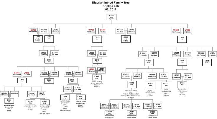 Google Family Tree New