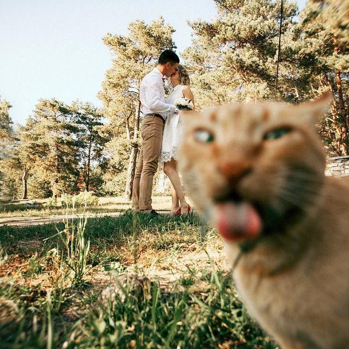cat wedding photobomb