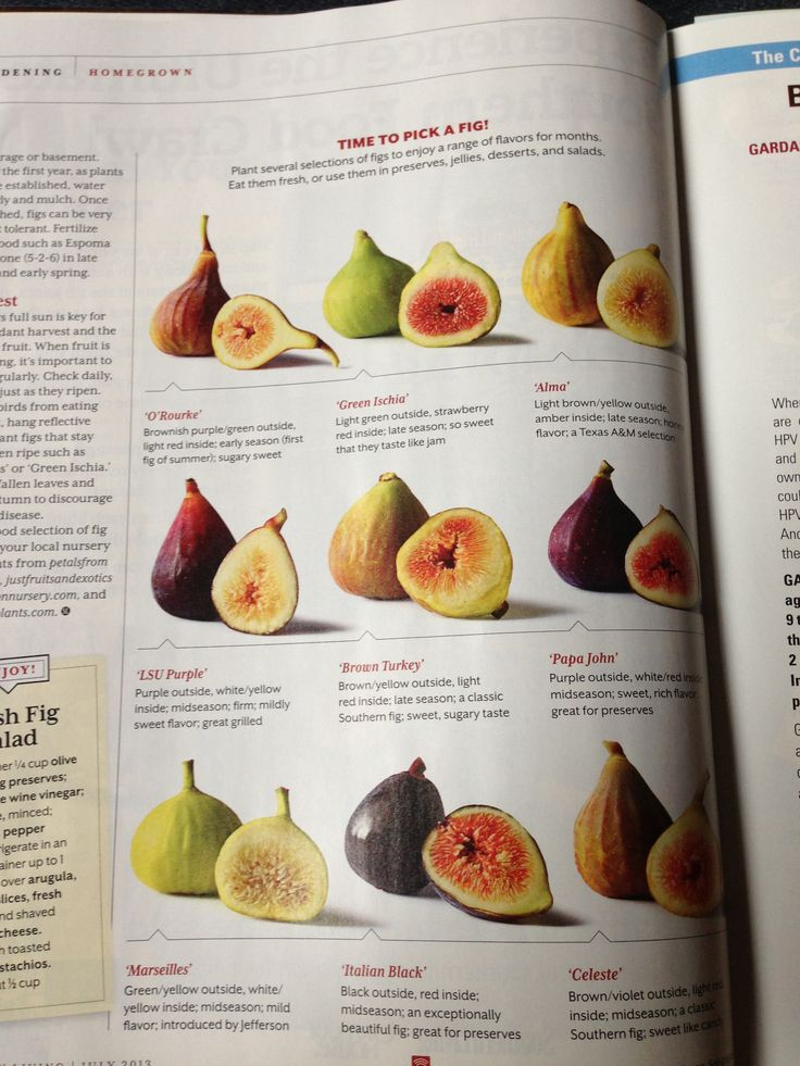 how to eat fresh black mission figs