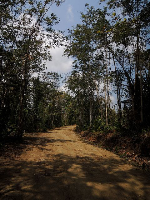 The three-meters-wide dirt road that spans 20 kilometers deep into the forest in Central Java has existed since early 90s when loggers began exploiting the area.