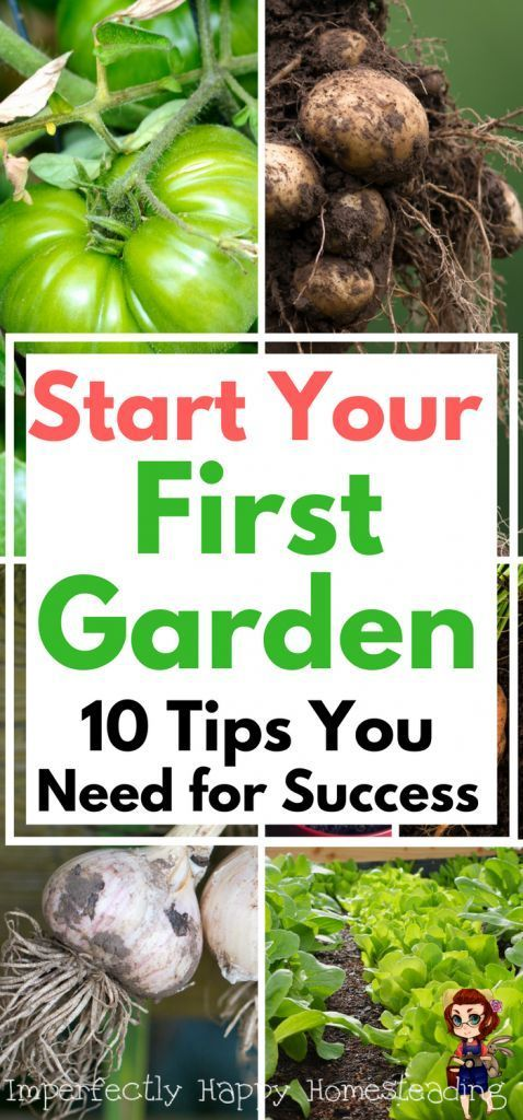 Start Your First Garden - 10 Tips You Need For Success When You're Gardening for the First Time.