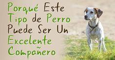En comparación con las características predecibles de los perros de razas puras, los perros callejeros vienen en una amplia variedad de pelaje, color, temperamentos y habilidades. http://mascotas.mercola.com/sitios/mascotas/archivo/2014/09/04/perros-callejeros.aspx