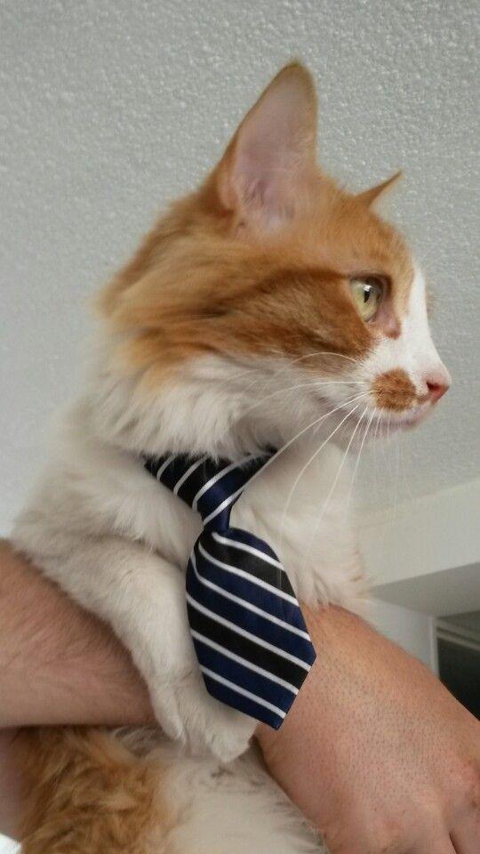 Leo con corbata