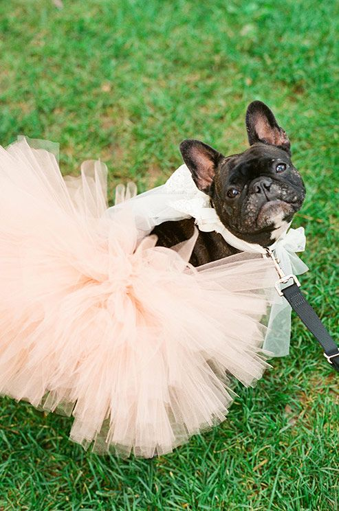 The chicest wedding pup we've ever seen is sitting pretty in a light pink tutu right before walking down the aisle.