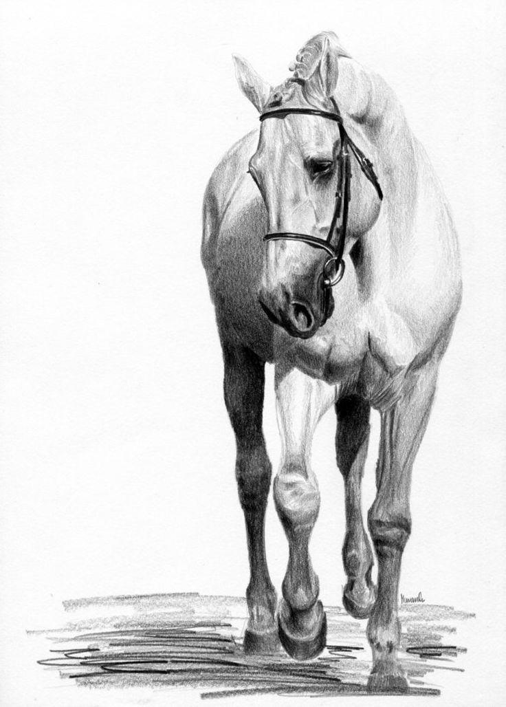 Siwy koń idący stępa.