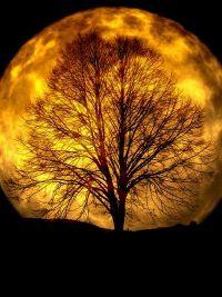 Czy fazy księżyca mają wpływ na nasz sen?