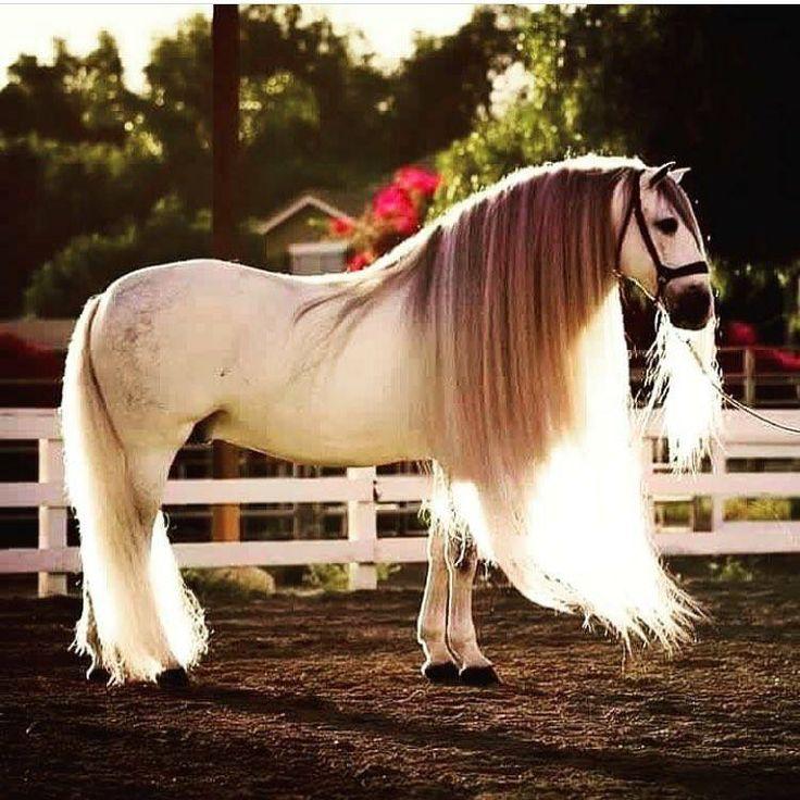 Картинки с самыми красивыми лошадками