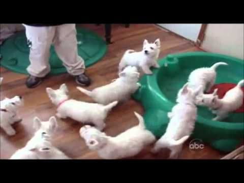 Funny Dogs Video Clips - Part 3