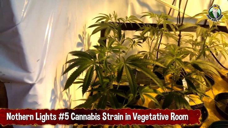 25 best images about crop kings seeds how to grow marijuana videos on pintere. Black Bedroom Furniture Sets. Home Design Ideas