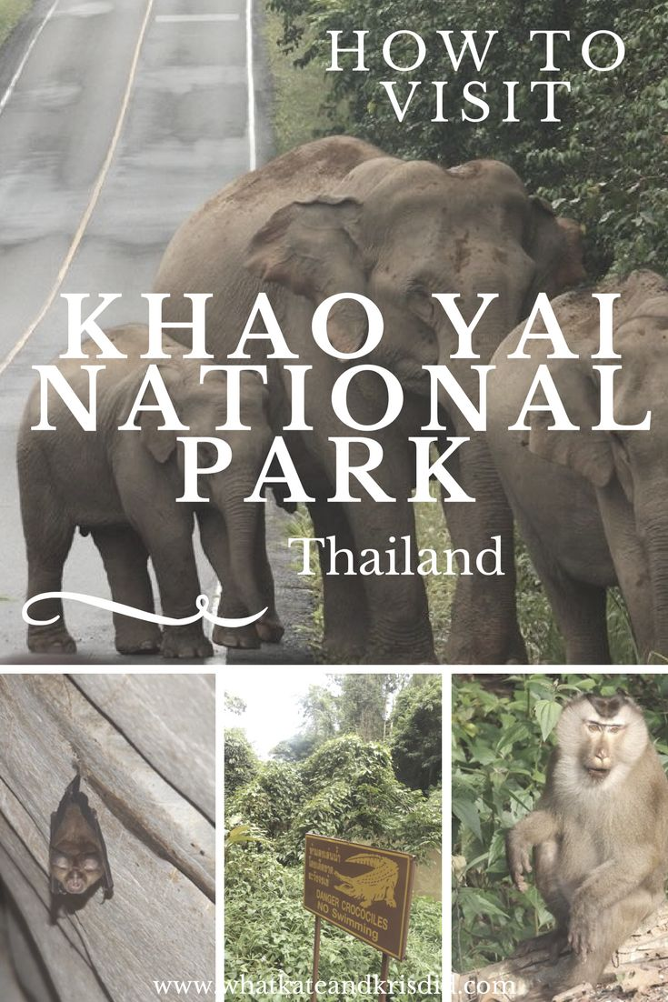 Travel, accommodation and tours in Khao Yai national park, Thailand