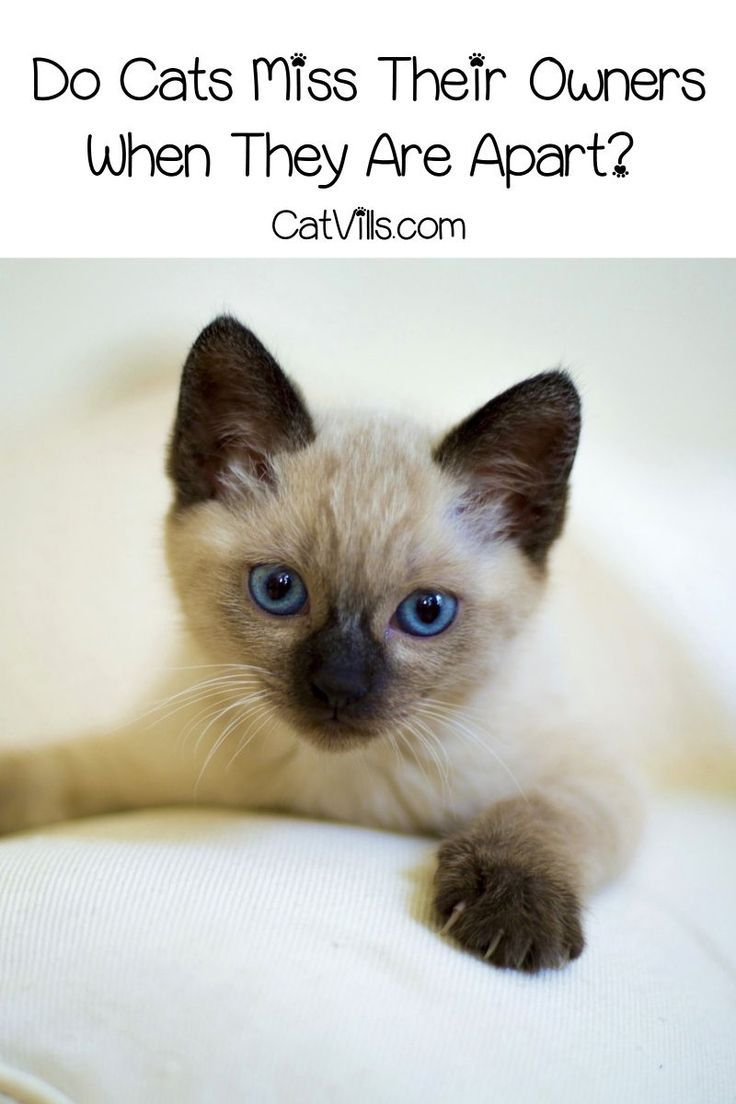 Do Cats Miss Their Owners When They Are Apart Cat Care Cat Care