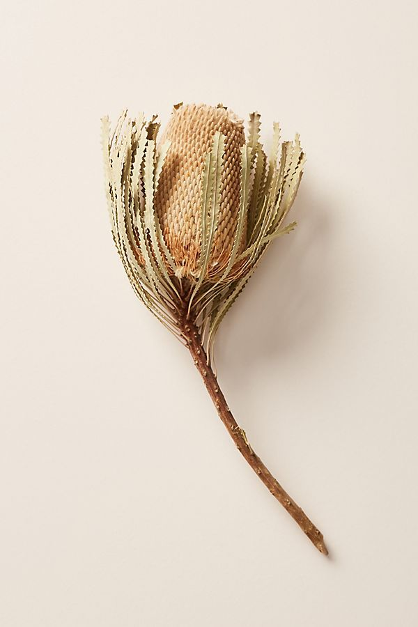 Slide View 2 Dried Banksia Flower Stem Australian Flowers List Of Flowers Flowers