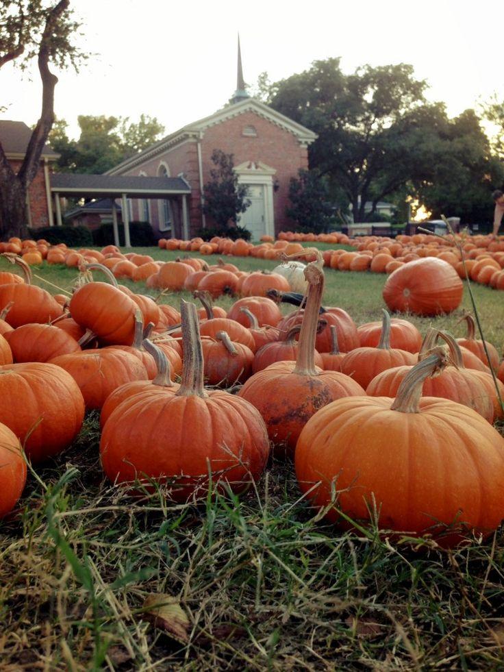 Tarrytown Pumpkin Patch Austin Texas
