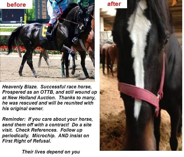Best Please Save The Horses  Equinerescuenetwork End Of The