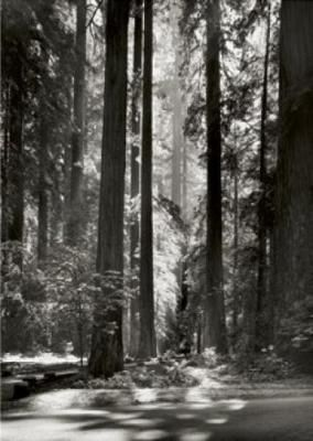 Ansel Adams photo🌾🌿🌴More Pins Like This At FOSTERGINGER @ Pinterest 🌾🌿🌾🌴