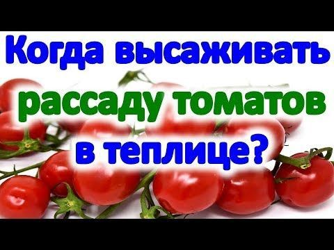 Photo of When to plant tomatoes in a greenhouse and open- Когда сажать пом…