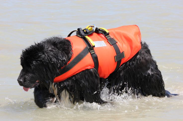 Terranova da salvataggio con tartaruga galleggiante