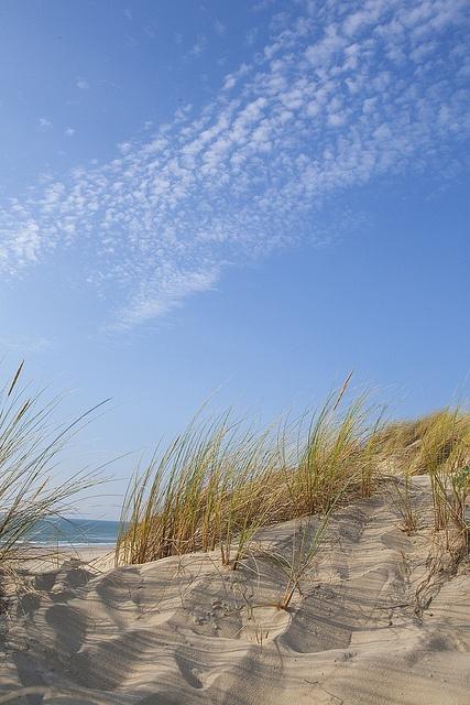 Dunes  Océan Atlantique
