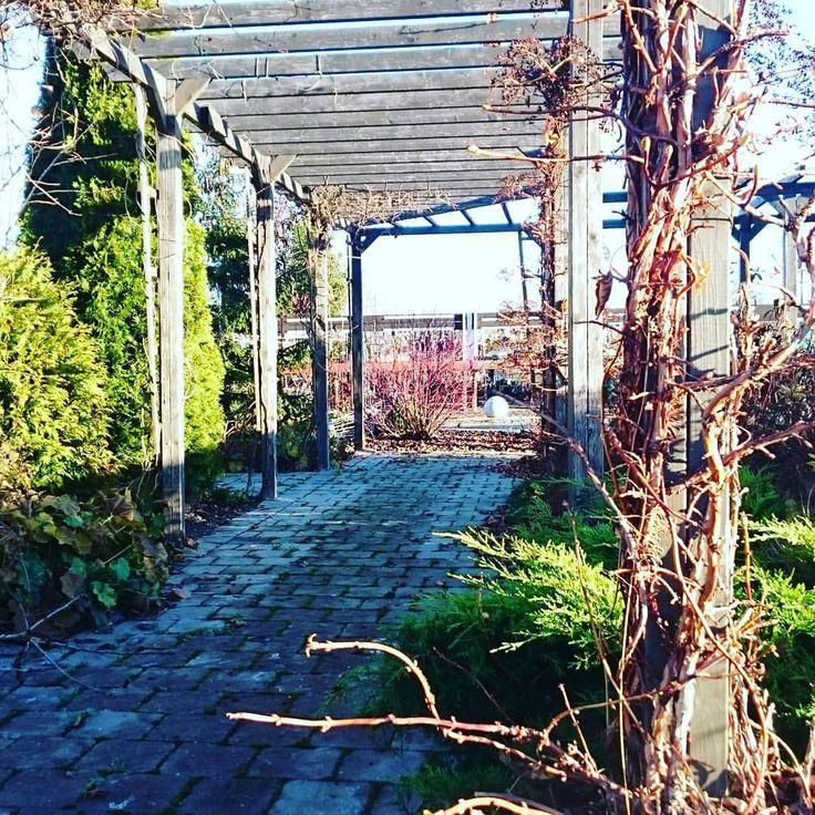 Trädgårdsväder! #oscarsbergs #inspirationsträdgården #klätterhortensia #spalje #garden #trädgård #trädgårdsrum #höst #autumn