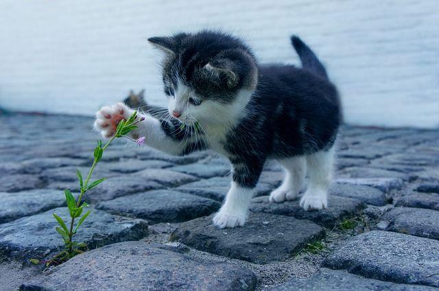 Free photo: Cat, Flower, Stone, Kitten, Pet - Free Image on Pixabay - 2536662