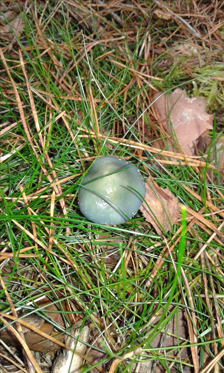 October mushrooms