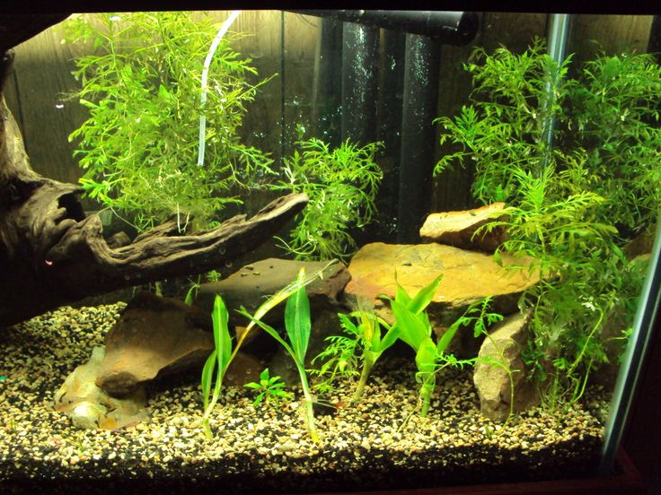 TheHydra.net • View topic - My 100 gallon :) Aquarium (Pic: HellpoolHall)