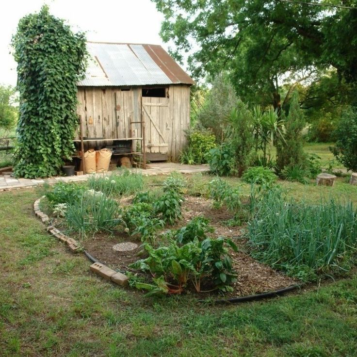 the traditional kitchen garden also known as a potager in french jardin potager or in on kitchen garden id=20661