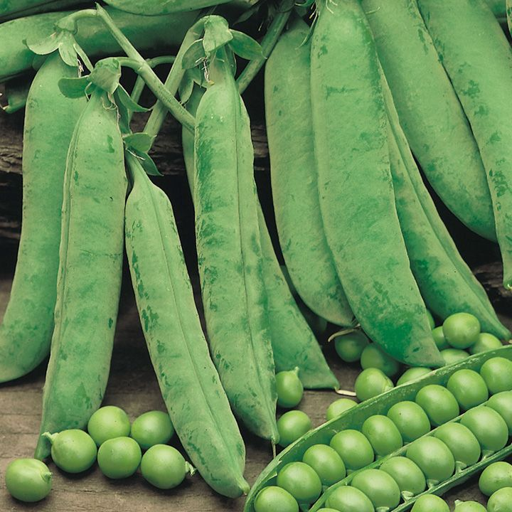 Pea Seeds - Douce Provence - Suttons Seeds and Plants