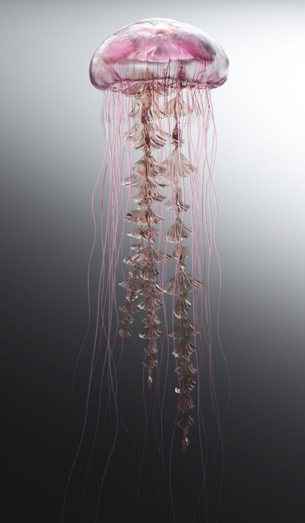 Jellyfish Portraits 3D - james-gardner.co.uk