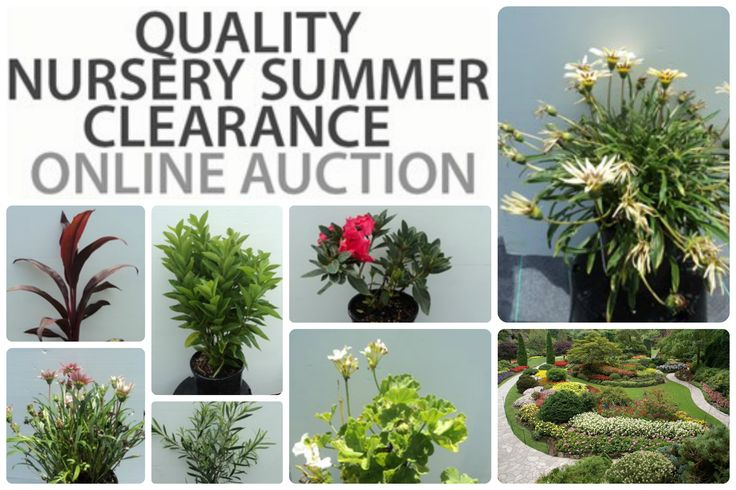 Change is better than a holiday! Make your Garden the Oasis you have always dreamed of, simply click to make your bid!