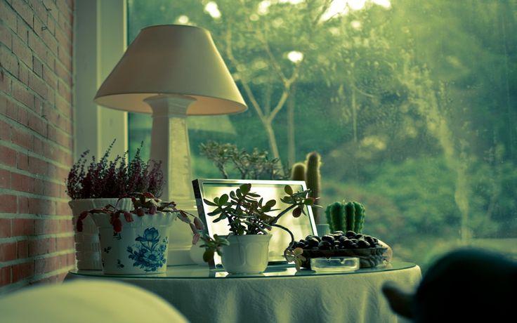 столик, дом, растения, лампа, кактус