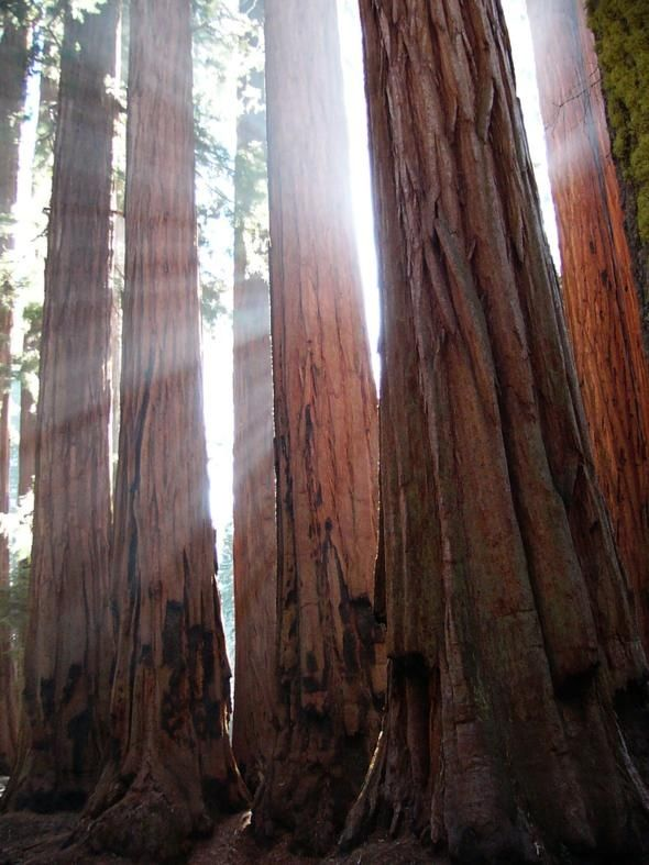 Visit Sequoia National Park, CA.  Just looking at these trees online make me feel small.